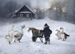 Elena Shumilova-摄影作品